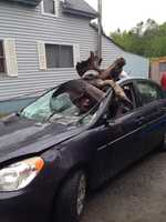 One man was taken to a hospital after his car collided with a moose.