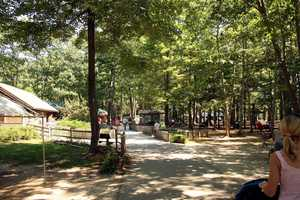 Visit the Maine Wildlife Park in Gray