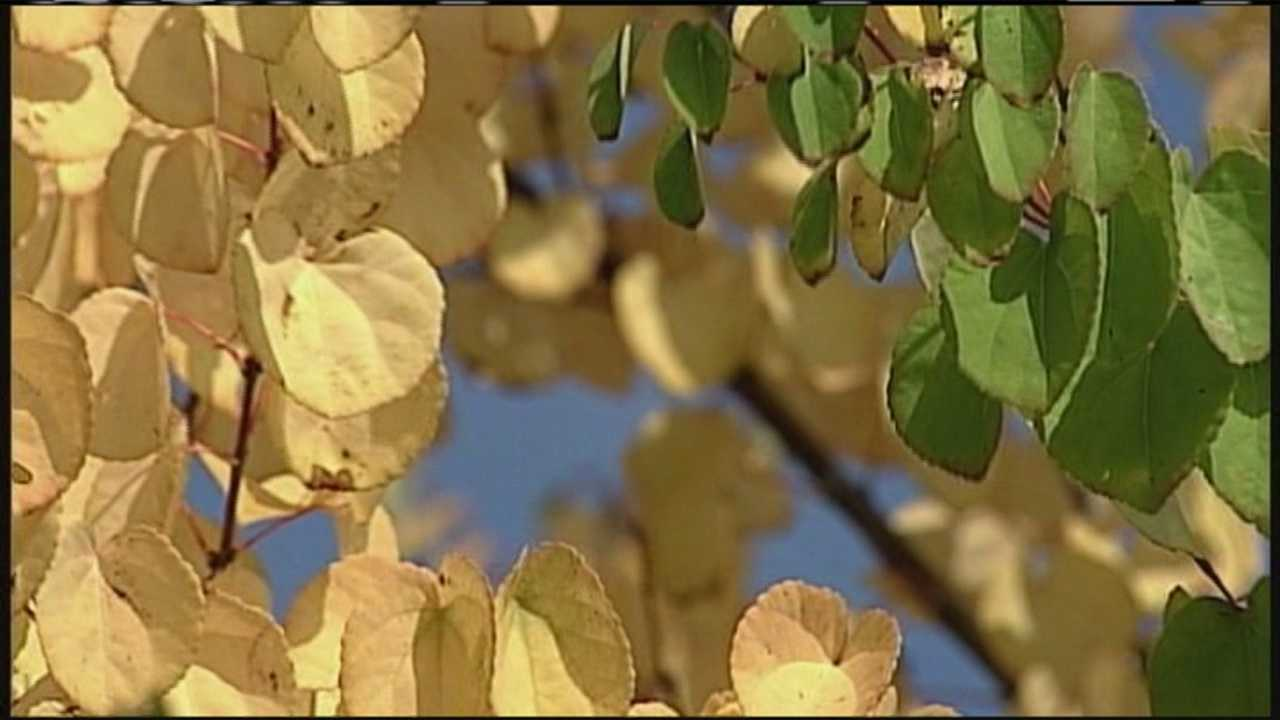img-Busy tourism season expected ahead of fall foliage