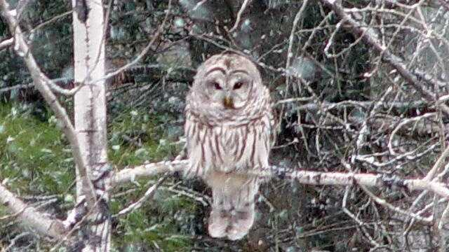 Owl u local