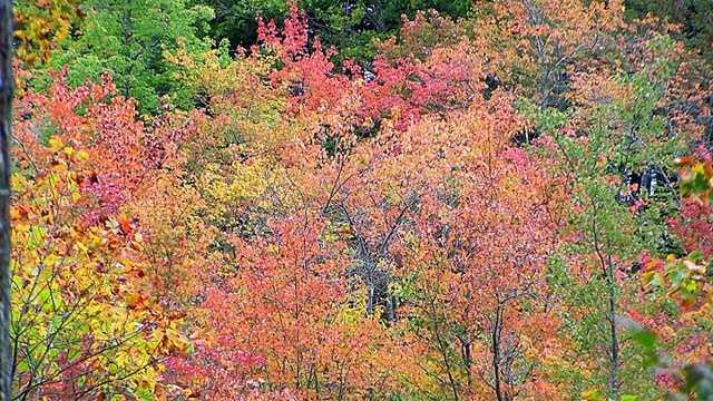 Image- NH Foliage generic