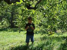 No. 6: Applecrest Farm Orchards in Hampton Falls, N.H.