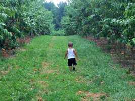 No. 1: Mack's Apples in Londonderry, N.H.