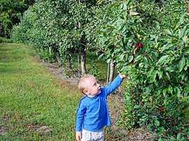 No. 7 (tie): Alyson's Apple Orchard in Walpole, N.H.