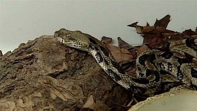 Warnings about rare snakes.