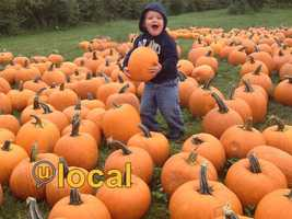 It's October, and that means Halloween is around the corner. It's time to go pick out your family's pumpkin! So, we asked YOU where you go to get your pumpkins in New Hampshire.