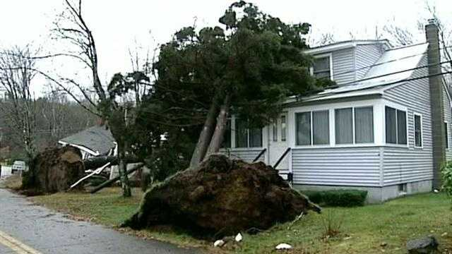 Microburst sends trees into houses