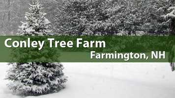 Conley Tree Farm, Farmington