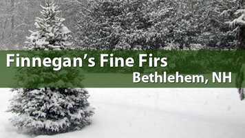 Finnegan's Fine Firs, Bethlehem