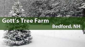 Gott's Tree Farm, Bedford