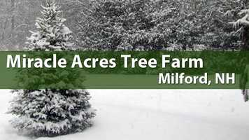 Miracle Acres Tree Farm, Milford