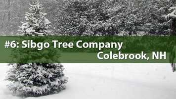 No. 6) Sibgo Tree Company, Colebrook