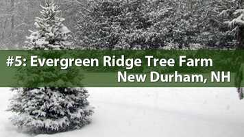 No. 5) Evergreen Ridge Tree Farm, New Durham