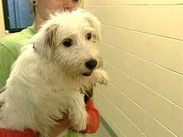 No. 9: The New Hampshire Humane Society said in May that a woman in Plymouth who was unable to care for her dogs left them caged nearly all day long for at least the last four years.