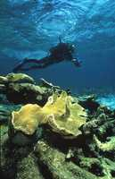 If Ray could go anywhere in the world right now, he would go scuba diving in the Great Barrier Reef.