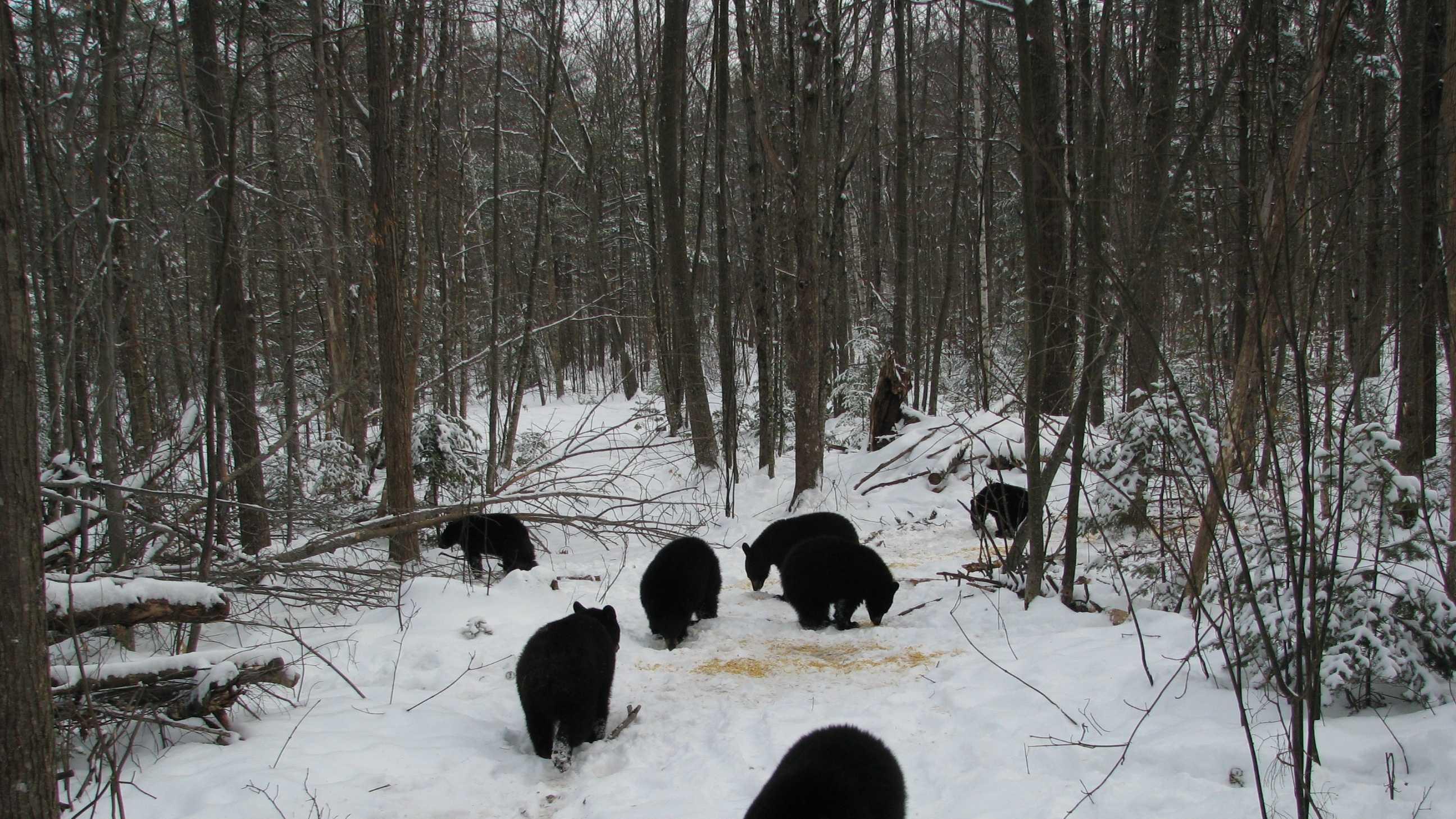 01-orphan-bearcubs-ARTICLE.JPG