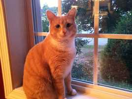 "Mike currently has one family pet. ""Our buff tiger cat Carly,"" Mike said."