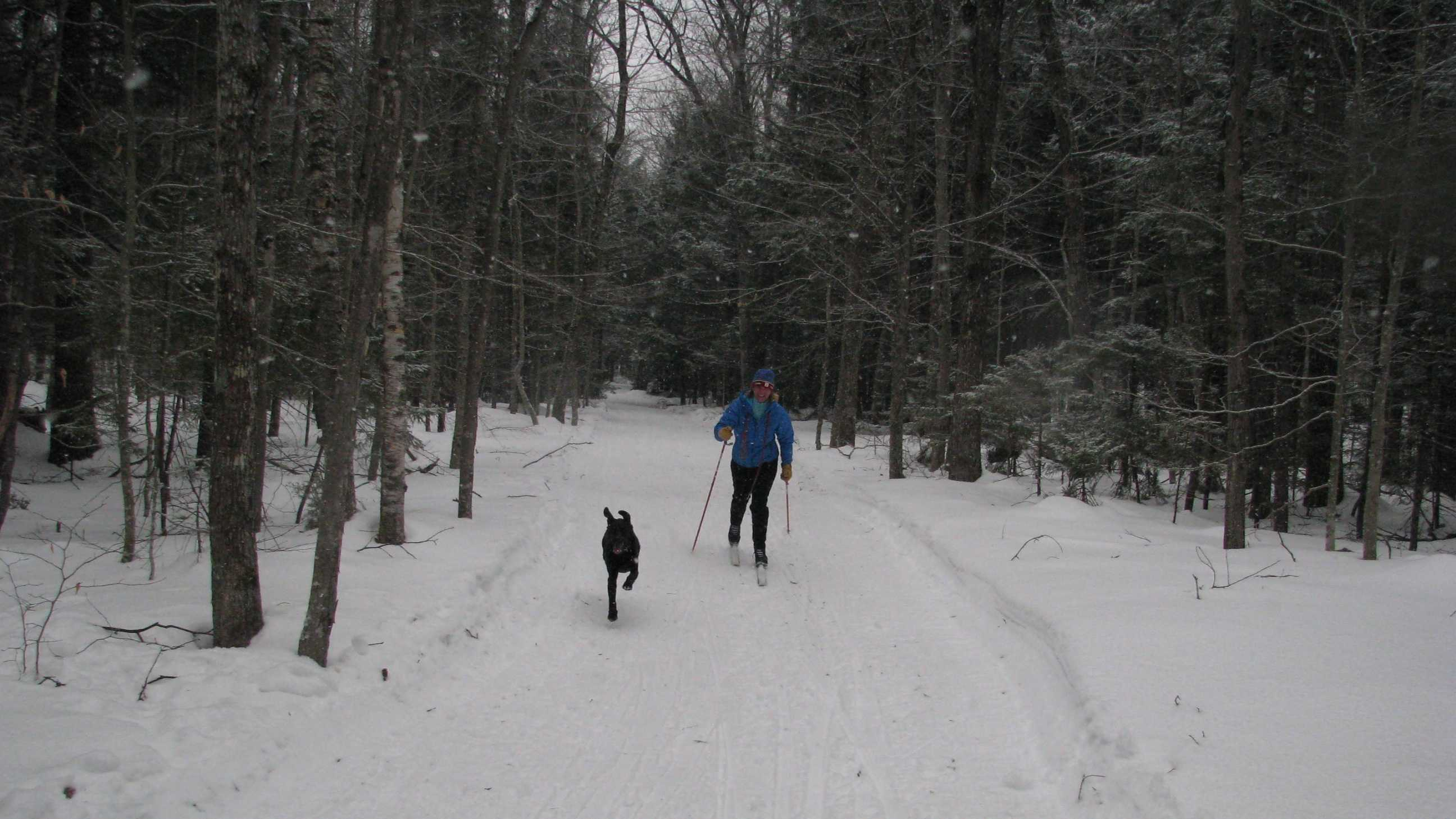 "Escape Outside Editor Paula Tracy skis at Bear Notch Ski Touring in Bartlett with her four-legged friend, ""Megan."" It is the only Nordic area in the state and all 65 groomed kilometers are open to dogs."