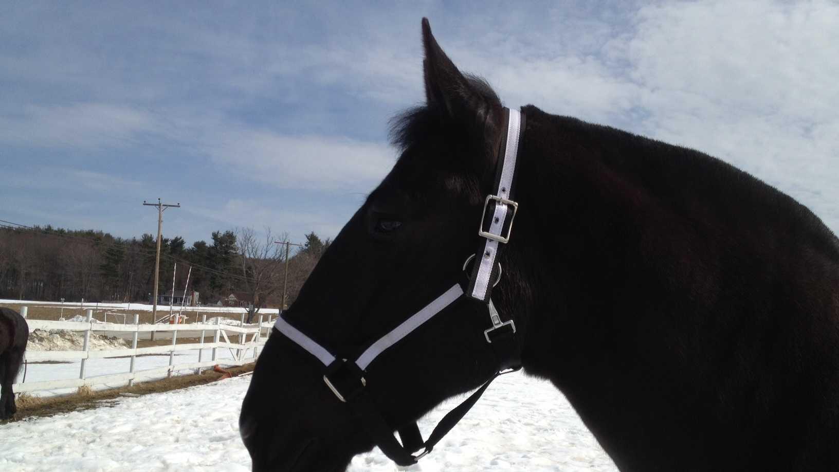 manchester-horse-311.JPG