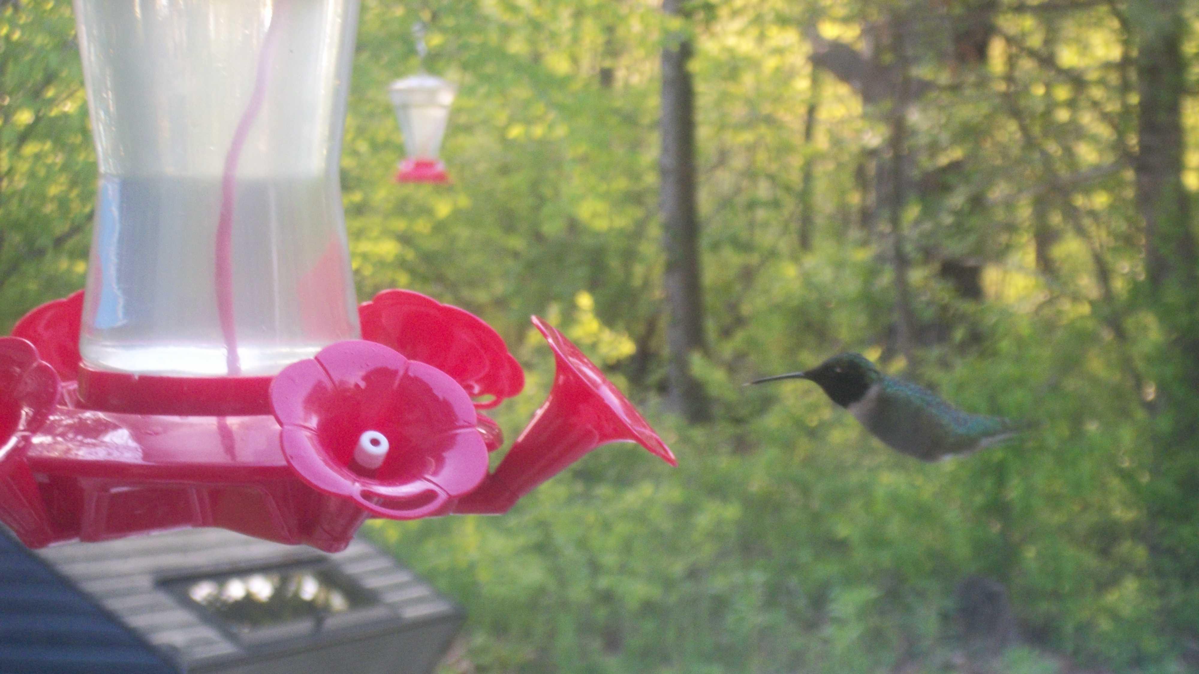 img-Bird feeder u local