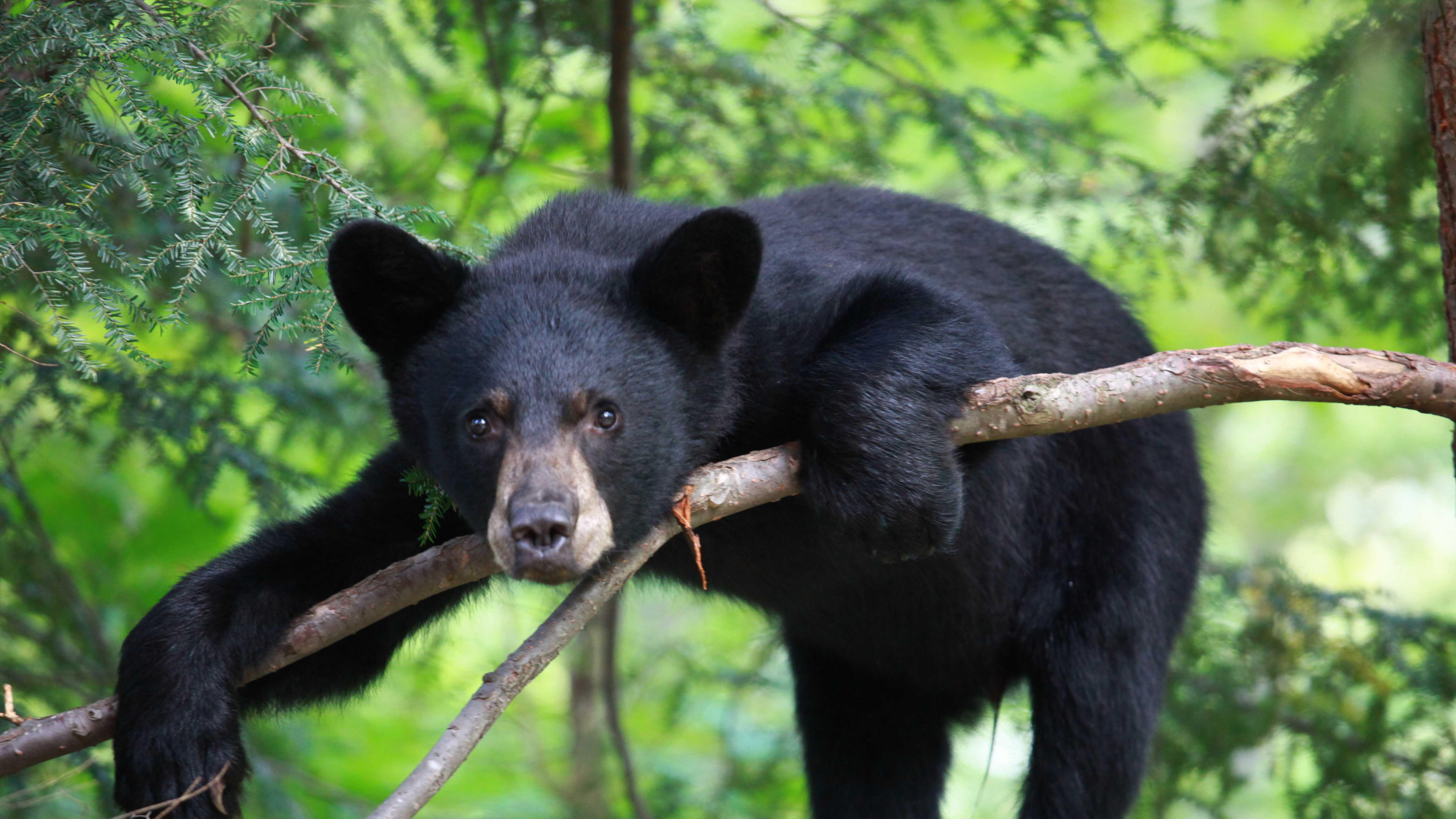 bear-ulocal-522.jpg