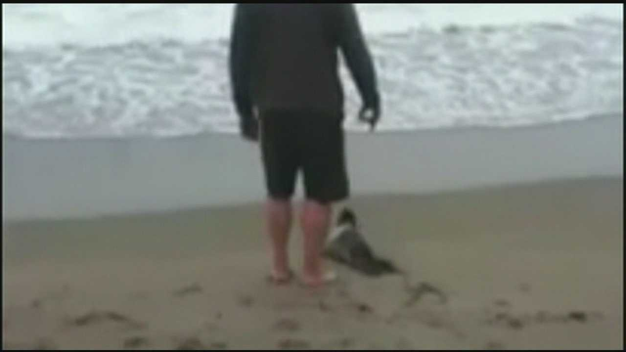 Man with seal