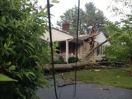 An elderly woman inside this home on Sheffield Street wasn't injured when a tree fell on her house.