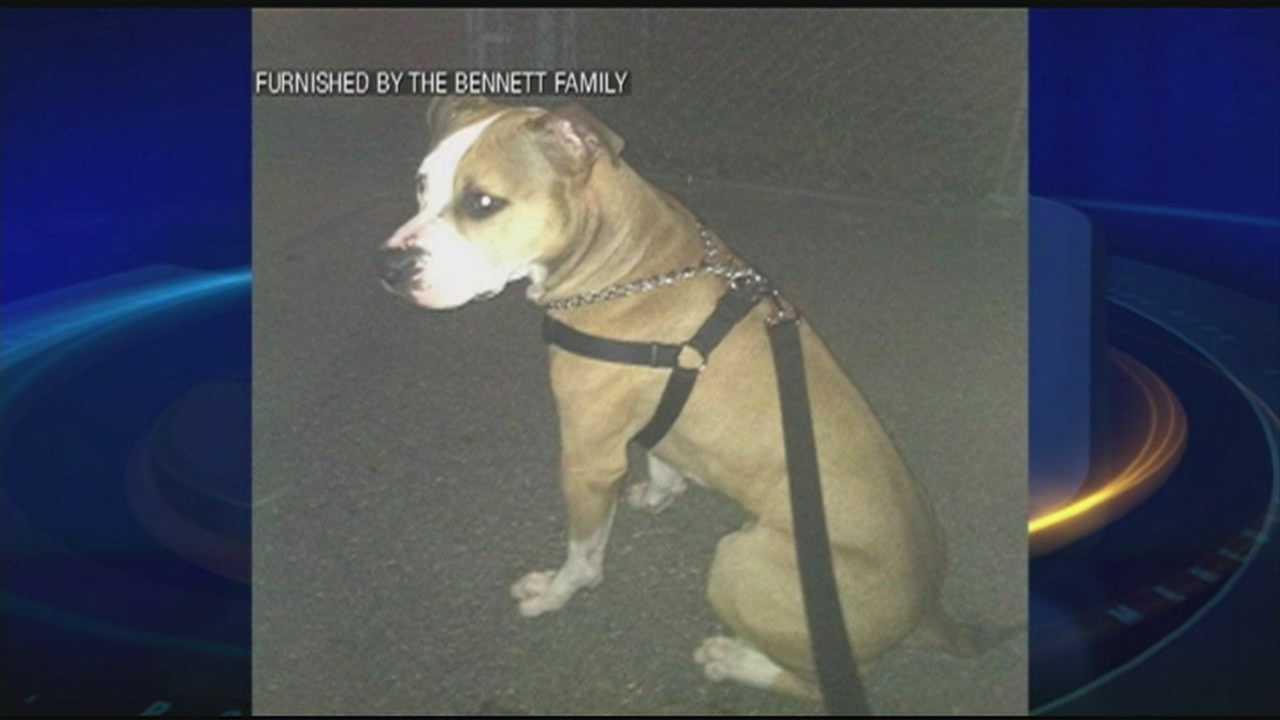 Dog shot and killed by Nashua officer after attacking man