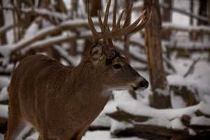 The white tail deer became the state animal in 1983.