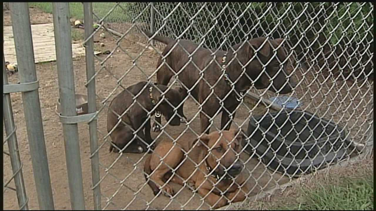 3 abandoned dogs found in crate in Bedford woods