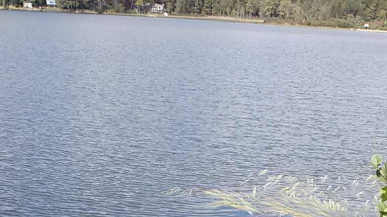 img-lyme pond rescue