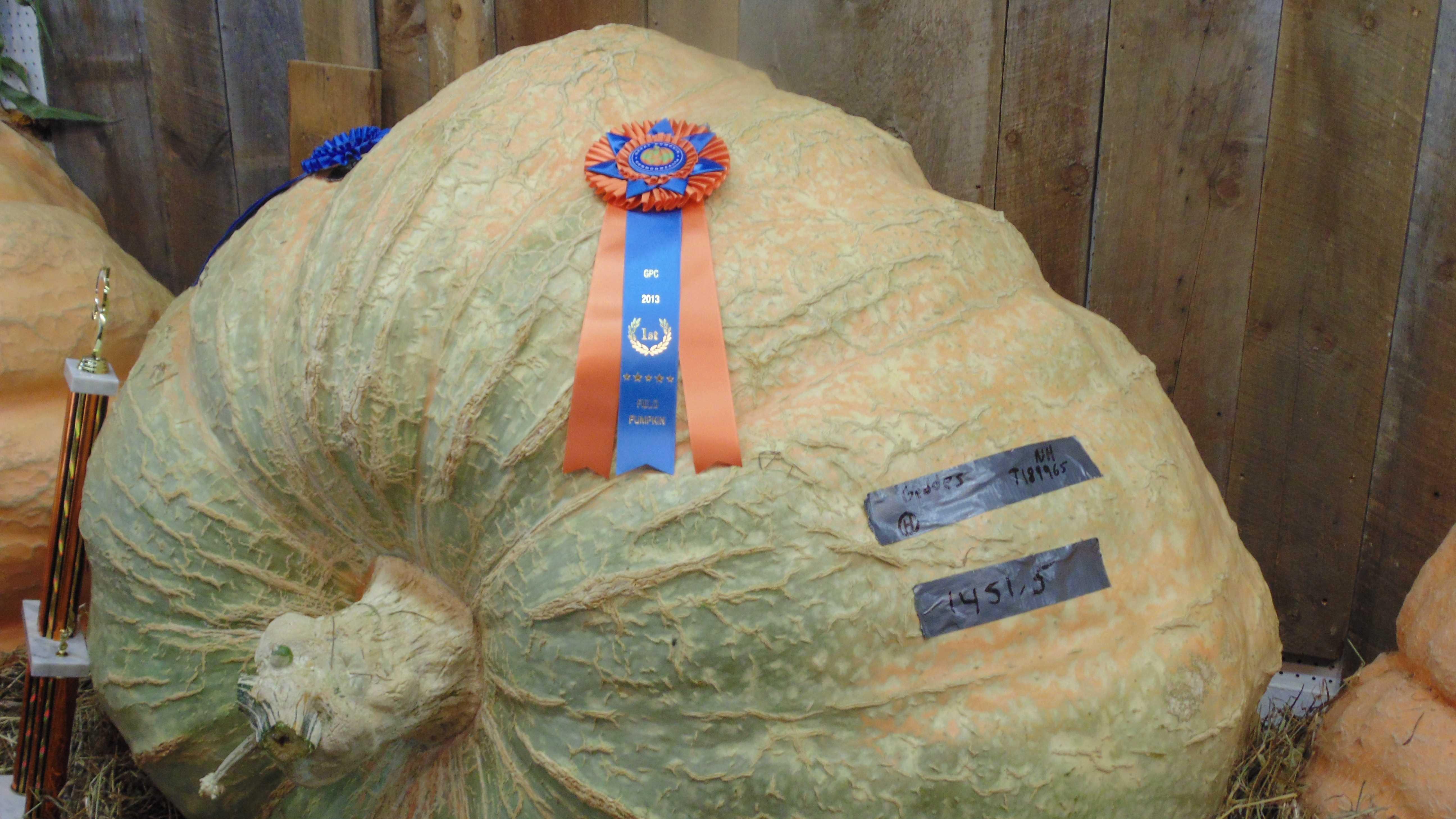 pumpkin-winner-927.JPG