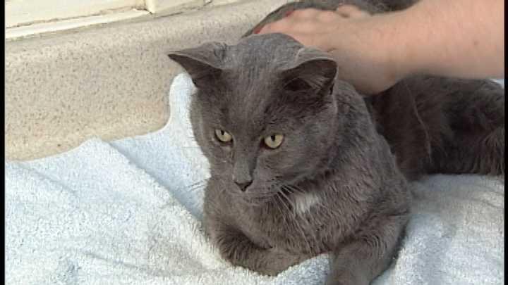 Adopt This Pet: Zahara, Earl Grey, and Kitty