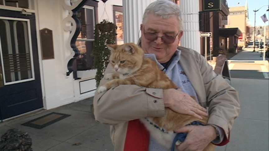 Mr. Cooper the Cat