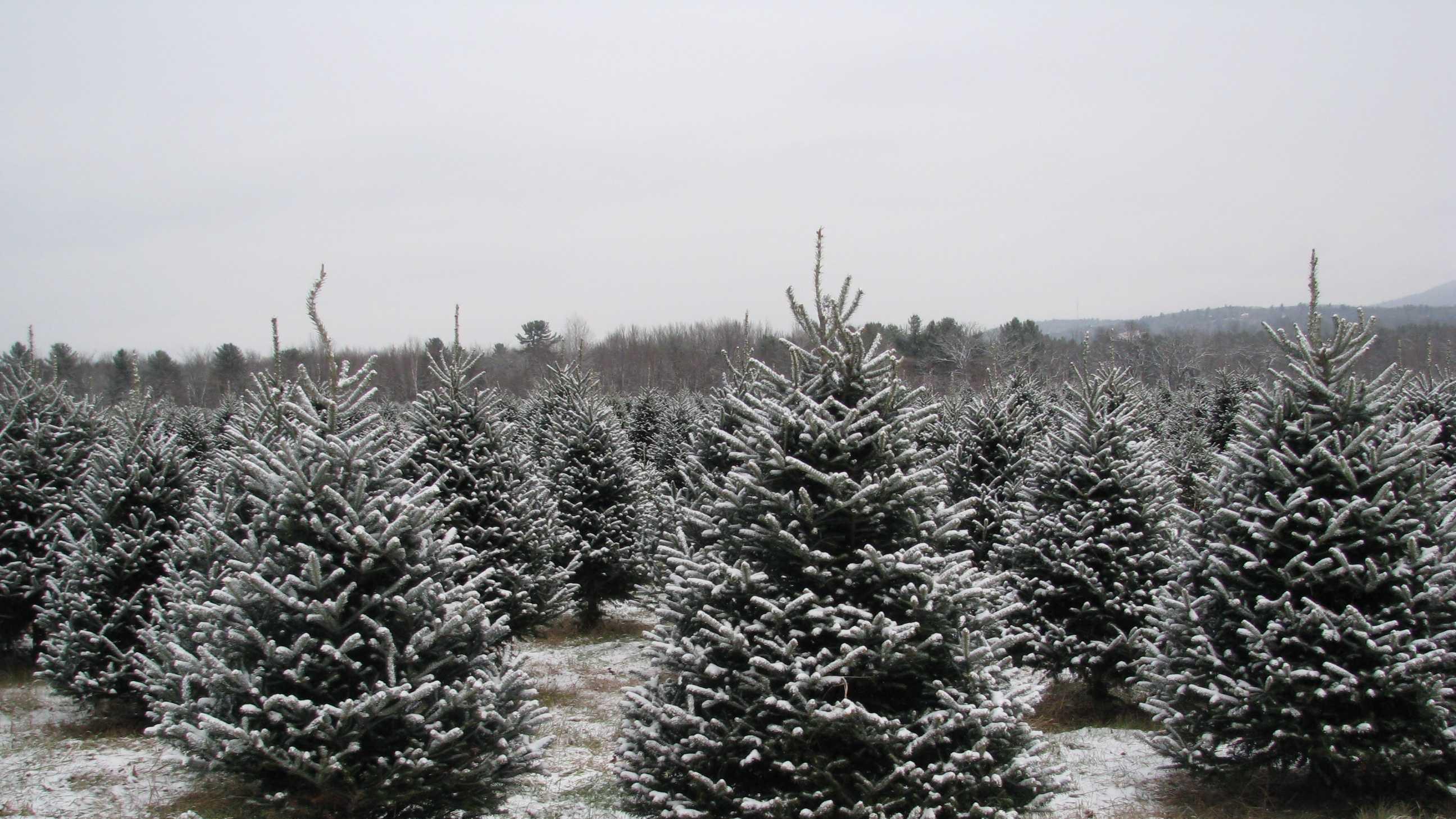 christmastree 007.JPG