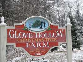 There are several Christmas tree farms across the state. Here is a collection of photos from Glove Hollow Christmas Tree Farm...