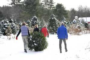 Now, here are a few photos from Nichols Tree Farm...