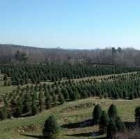 2) Evergreen Ridge Tree Farm in New Durham