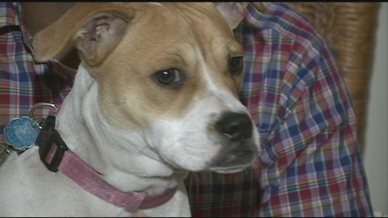 Dover dog found
