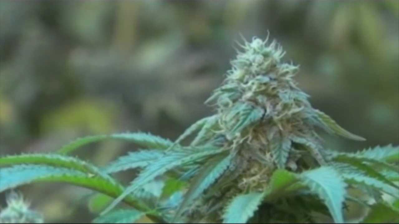 Licenses awarded to medical marijuana dispensaries
