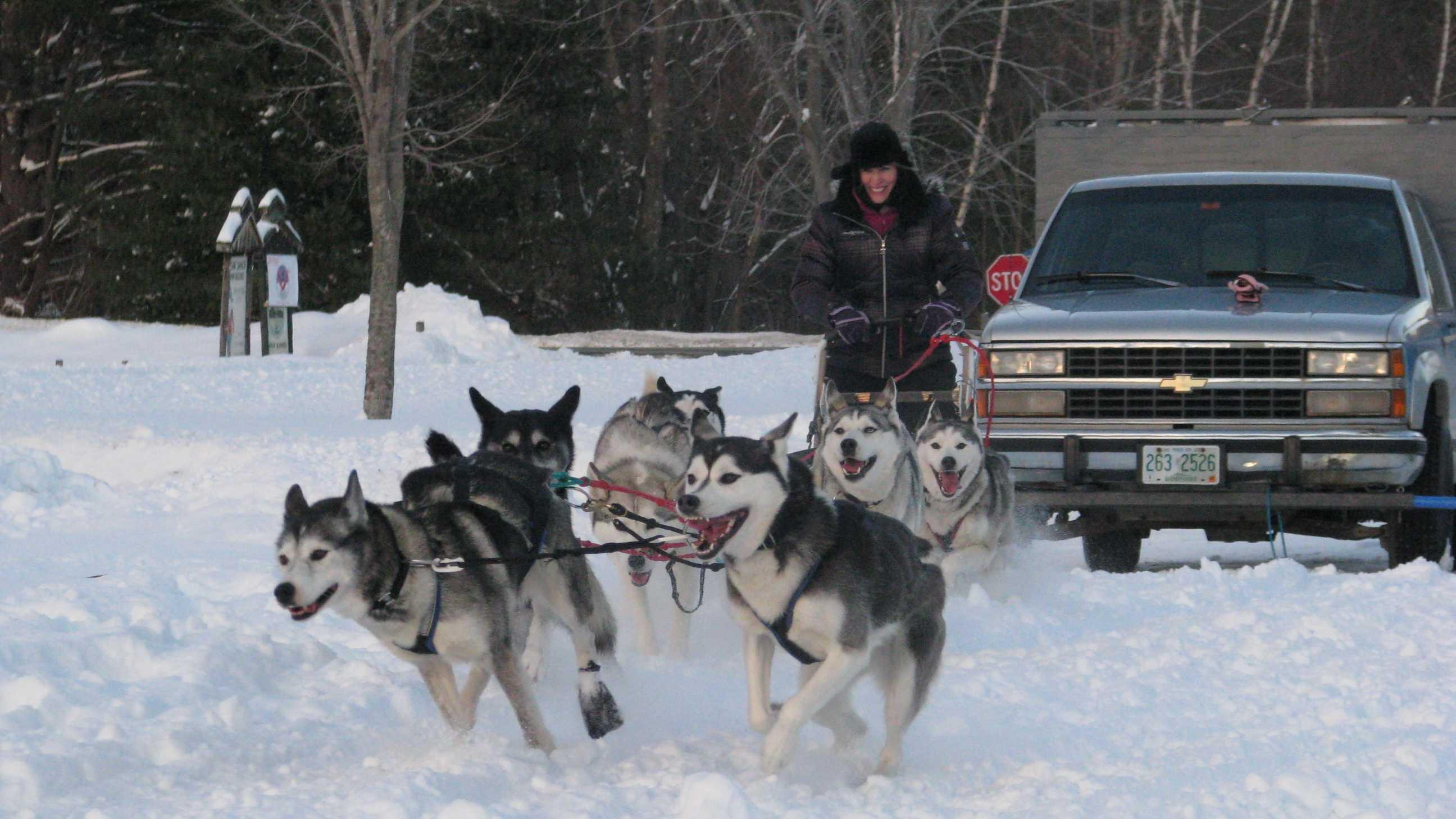 Sled Dog Derby