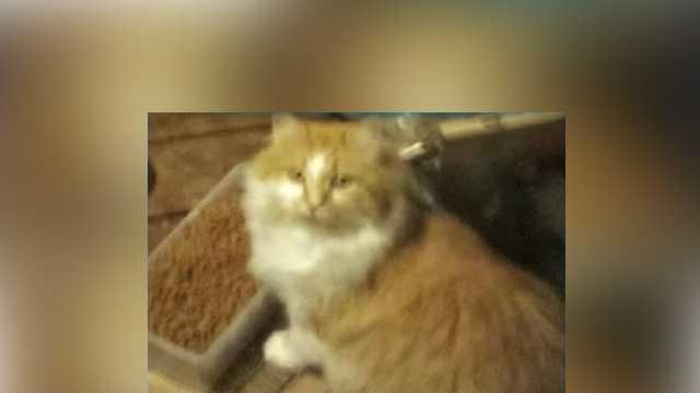 Raymond-cat-34.jpg