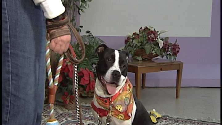 To adopt Ohana, contact the Animal Rescue League of NH:www.rescueleague.org &#x3B; Phone: 603-472-DOGS (3647)
