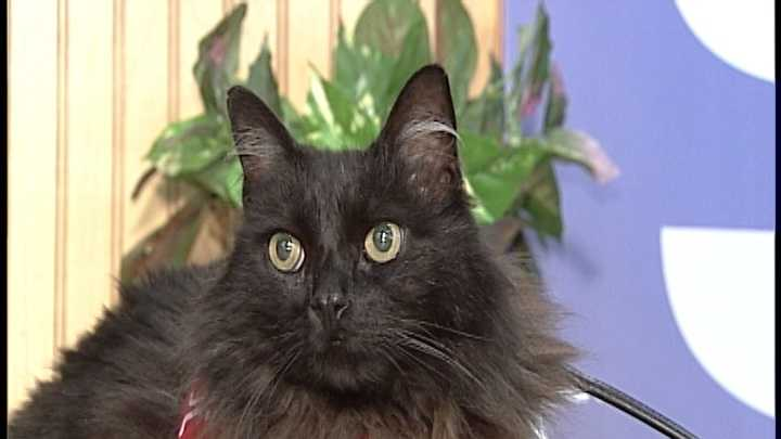 To adopt Fogerty, contact the Manchester Animal Shelter:603-628-3544 &#x3B; www.ManchesterAnimalShelter.org