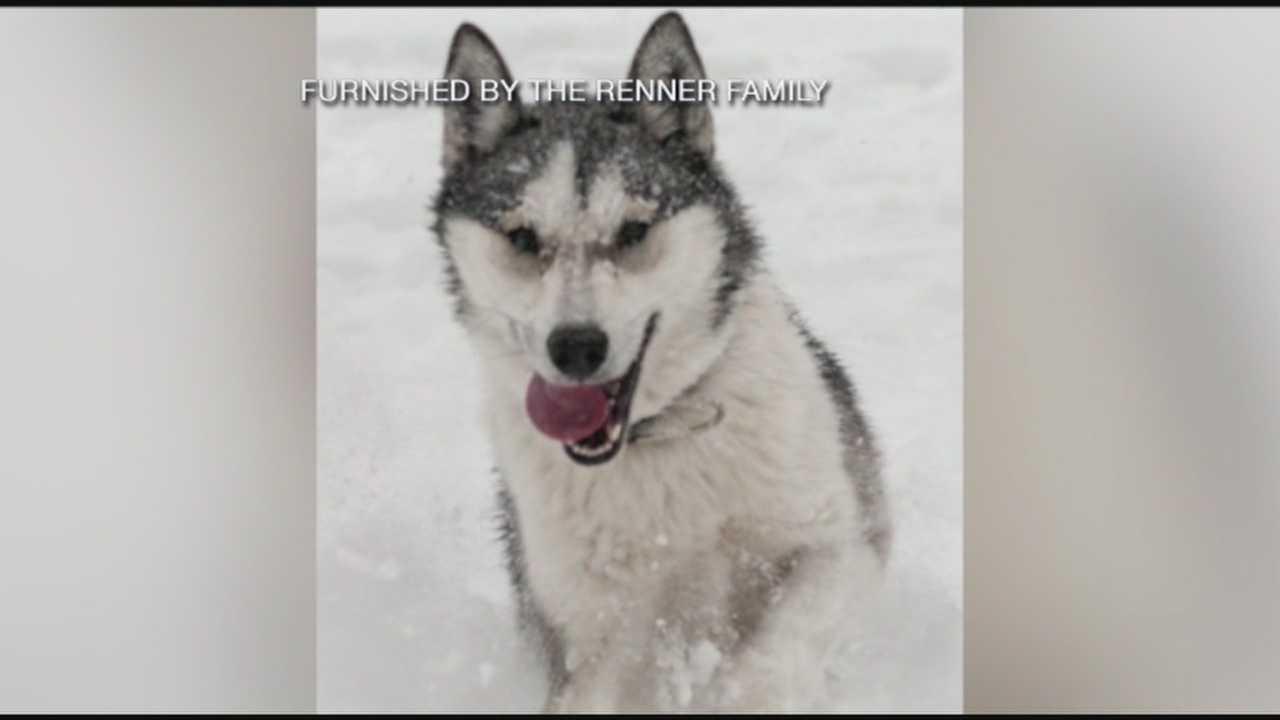 Alton Missing Sled Dog