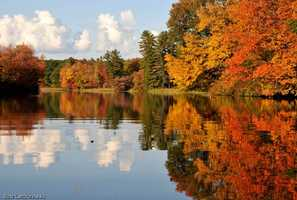 21) AshlandPercent of population born in New Hampshire: 59.0%
