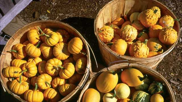 gourds-large.jpg (1)