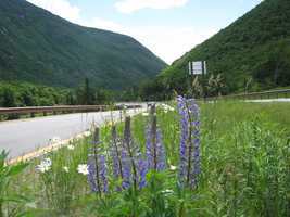 Bursting with flowers, and cool mountain waters, a road trip is in order this summer, above the notch.