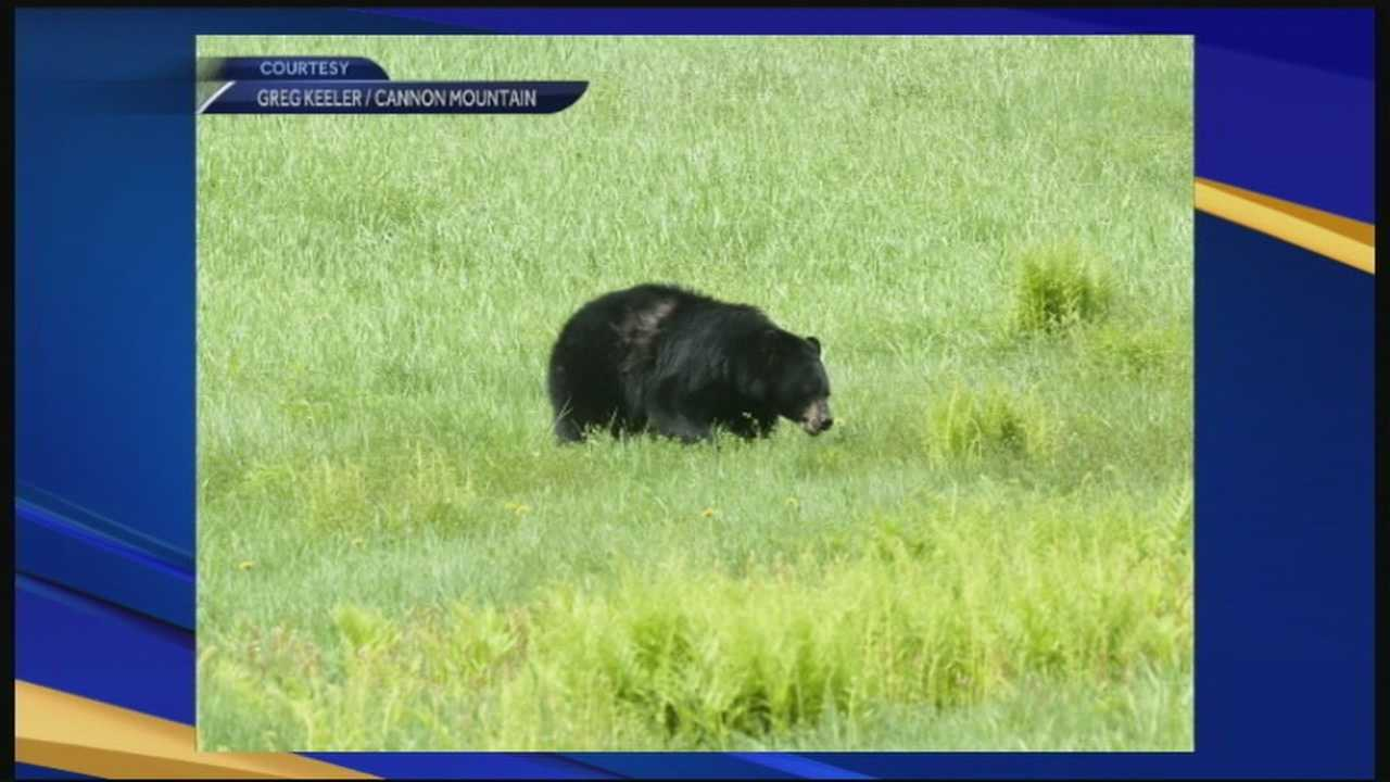 Bears spotted earlier than usual
