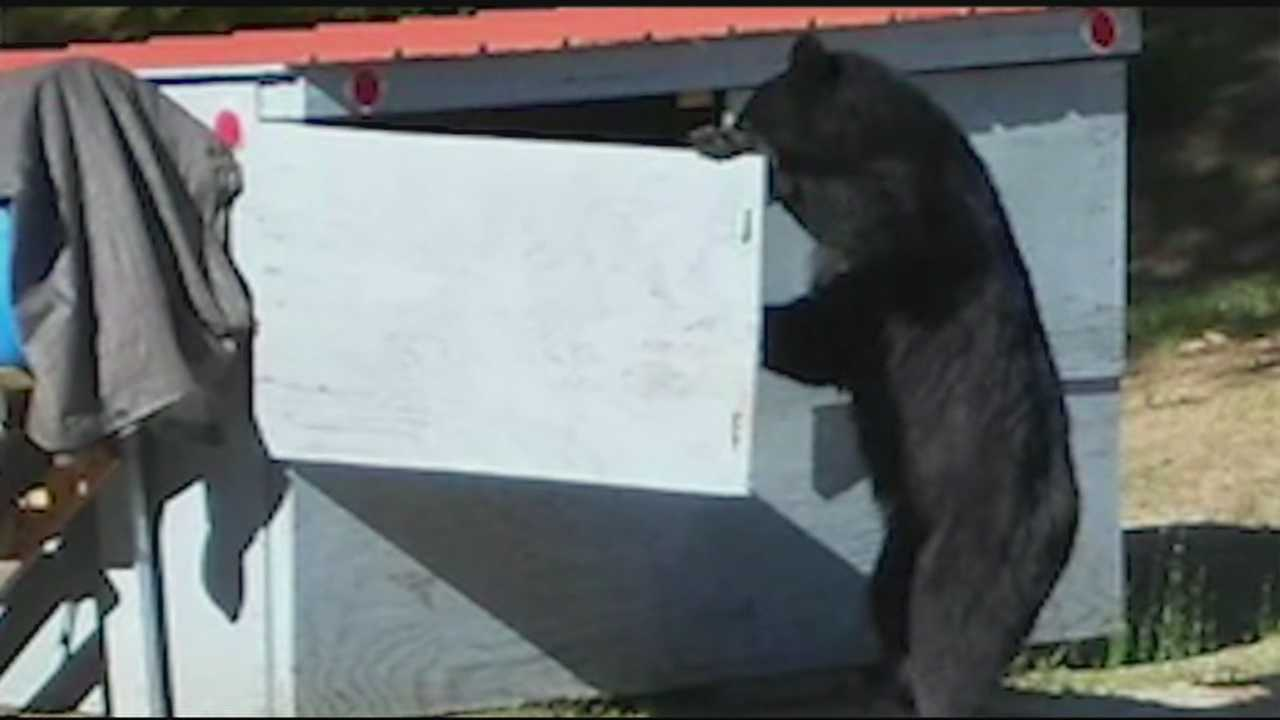 A black bear in New Hampton is making local families nervous after to broke into a family's dumpster.